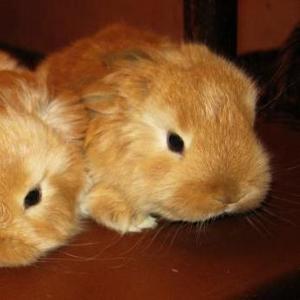Продаются кролики вислоухие