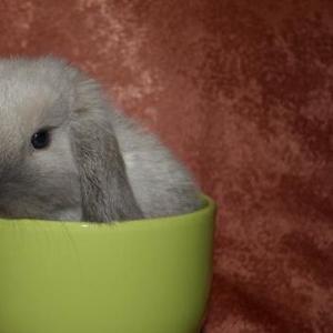 Продаю карликовых крольчат.