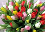 Тюльпаны прямо из теплицы с доставкой в Ваш город